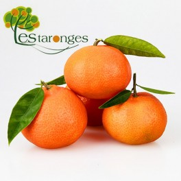 15Kg Tangerines Clementines
